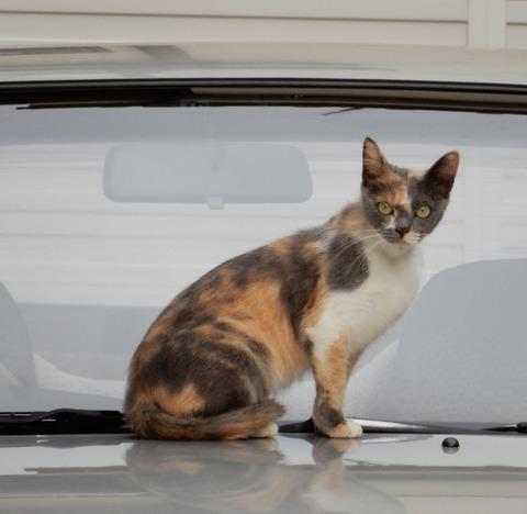 cat201509006