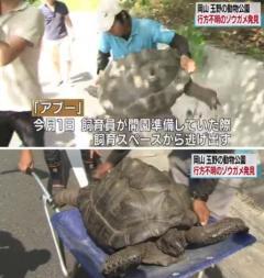 動物公園のゾウガメ見つかる 失踪から2週間余 岡山 玉野