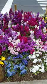 アキバのお花