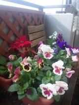 ベランダお花