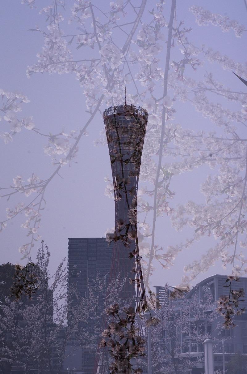 ポートタワー撮影会 友岡_180405_0009