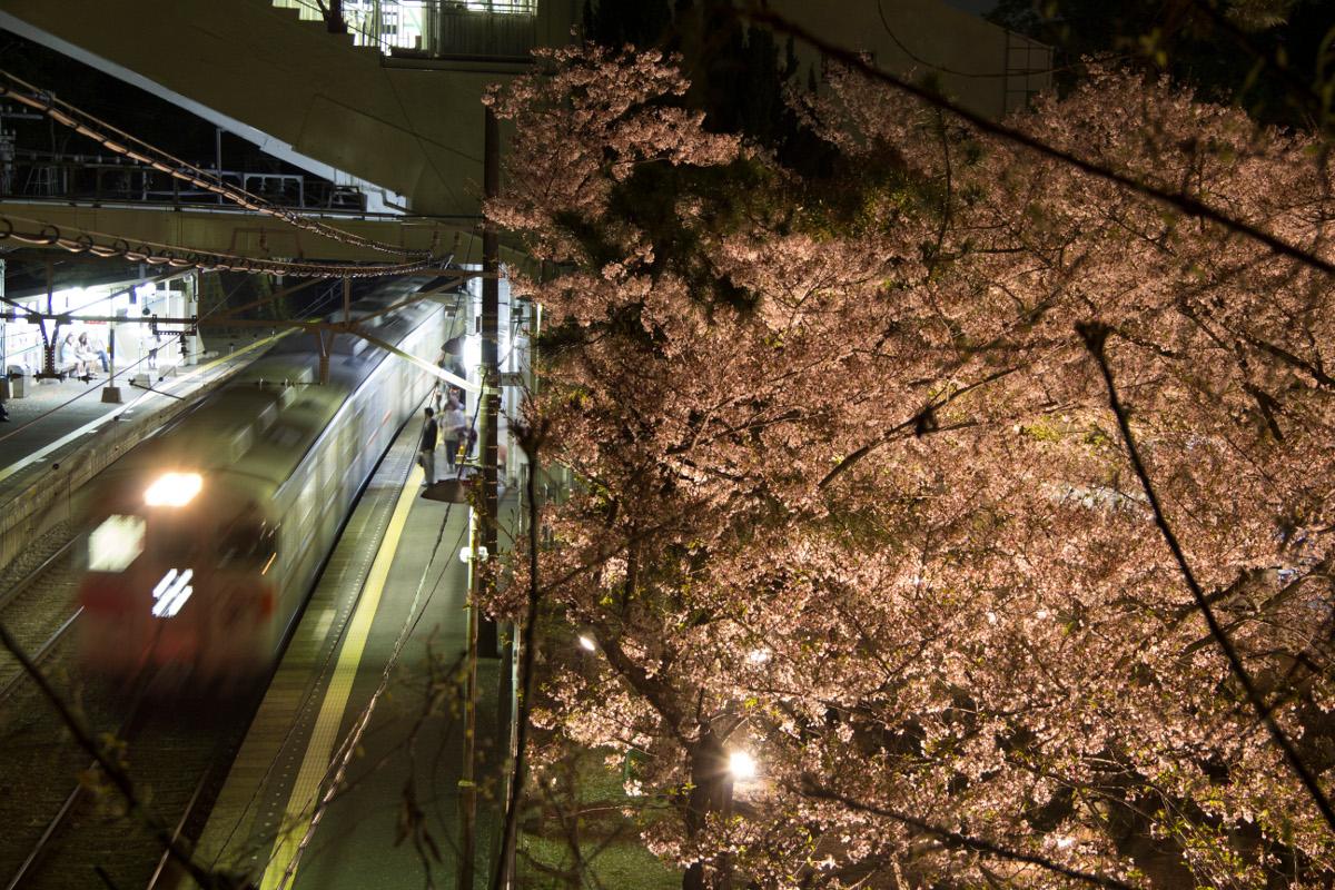 電車と夜桜