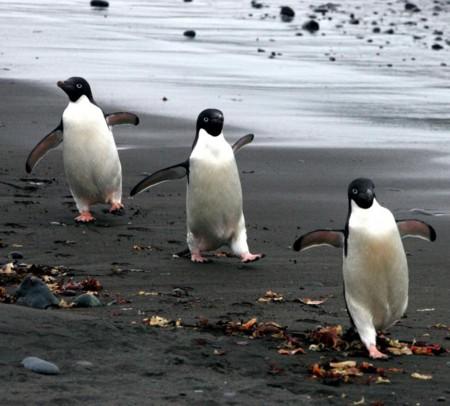 3連ペンギン