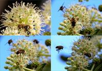 ハチたち元気