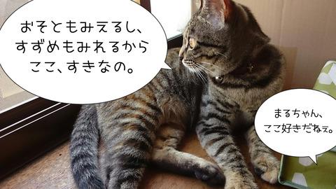 ハッちゃん来た!①