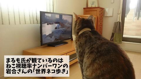 世界ネコ歩き①