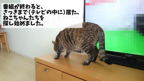 世界ネコ歩き②
