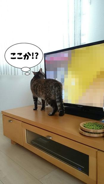 世界ネコ歩き③