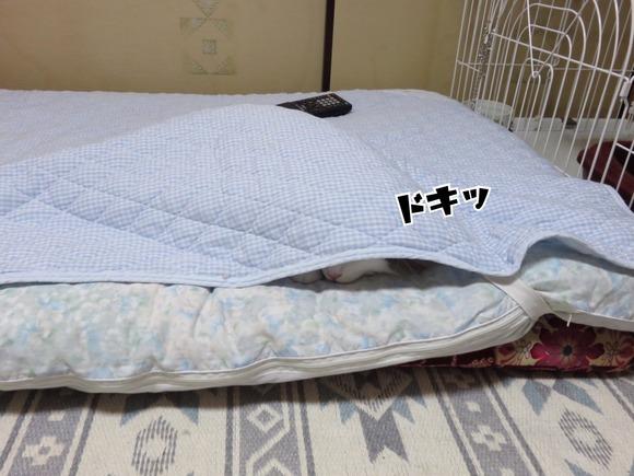 FF3B58F5-38C0-47FD-86DF-00839365E229