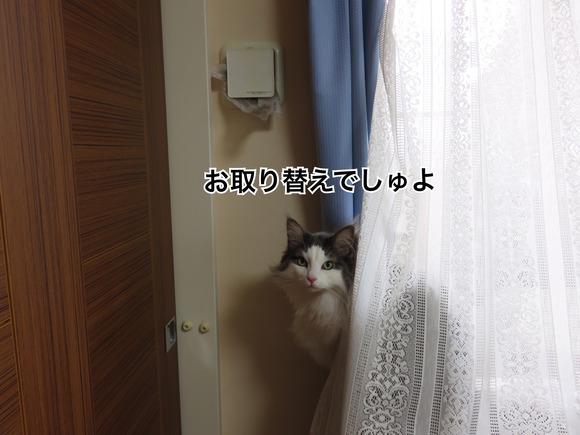 IMG_6017