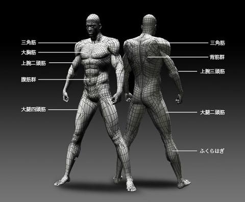 muscleimage