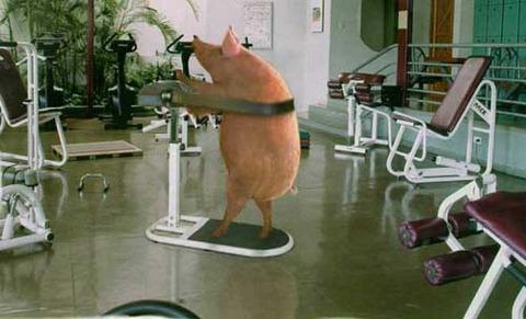 pigworkout