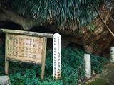 八幡神社境内のクス