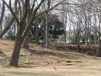 根岸森林公園 (9)