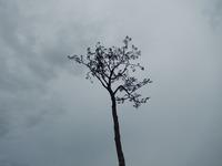 陸前高田 奇跡の一本松 (12)