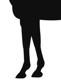 ミスワキ-脚