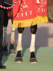 171125-11グレイル脚