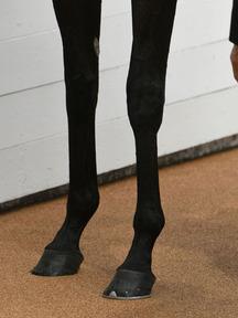 171007-5タガノカレン脚