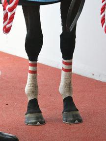 181209-11ダノンファンタジー脚