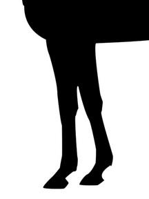 エリシオ-脚