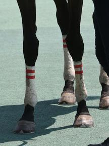 190804-6ヒバリ脚