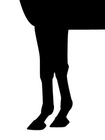 ワイルドラッシュ-脚