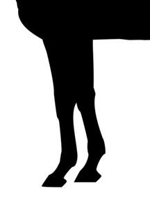 フォーティナイナー-脚