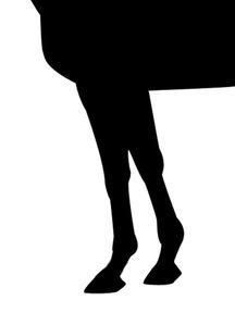 オジジアン-脚