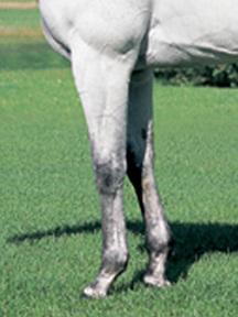 クロフネ-脚