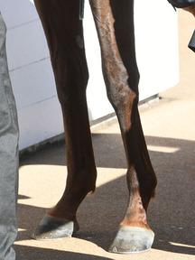 191123-4サトノラファール脚