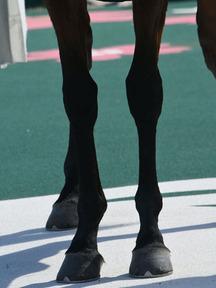 170225-3スズカモナミ脚