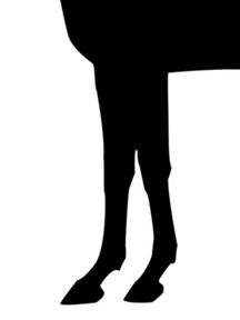 アジュディケーディング-脚