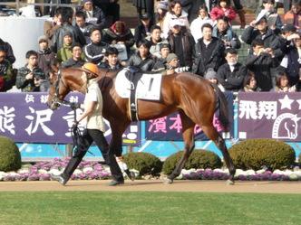 タイムチェイサー-新馬戦パドック