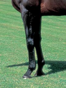 ジェイドロバリー-脚
