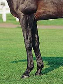 キンググローリアス-脚