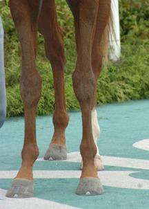 ケイアイウミノカミ-脚