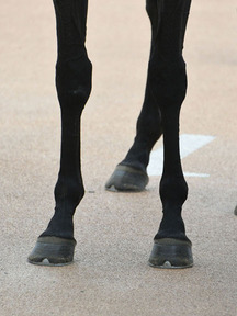 181006-4スマートモリガン脚