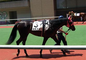 オネスト-新馬戦パドック