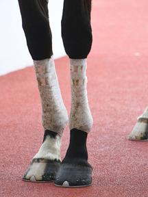 181201-5キュールエミヤビ脚
