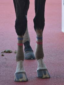 161210-6アンタガシャチョウ脚