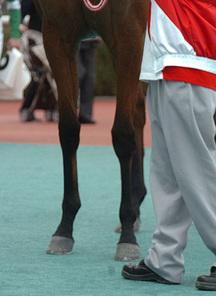 ショウサンウルル-脚