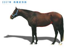 メイショウサムソン馬体_07年有馬記念時