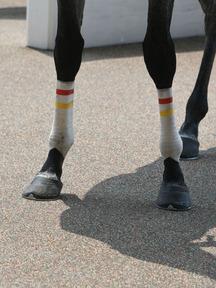 180804-5ミヤジシルフィード脚
