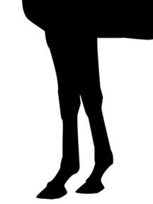 カーネギー-脚