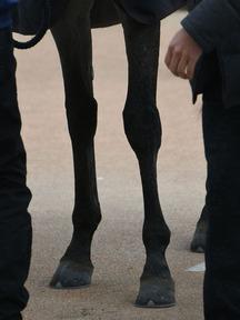 180114-4オメガパフューム脚
