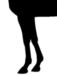 シーキングザゴールド-脚