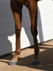 190119-4ララケリア脚
