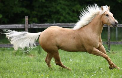 馬の毛色について : 5000字のシュシュとお馬さんのおはなし⊂・^ミ ...