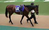 安田記念予想【2012年】-昨年の勝ち馬