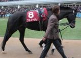 日本ダービー予想【2012年】-青葉賞勝ち馬はいかがでしょうか…!!